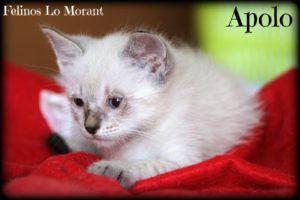 Adoptado-Apollo