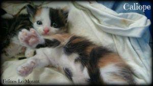 Adoptado-Caliope
