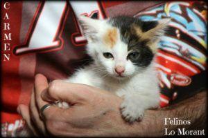 Adoptado-Carmen