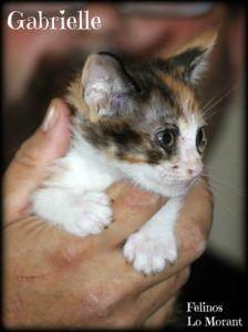 Adoptado-Gabrielle
