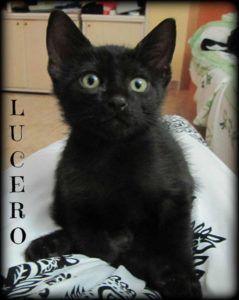 Adoptado-Lucero