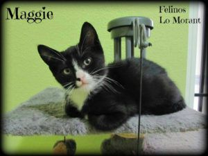 Adoptado-Maggie
